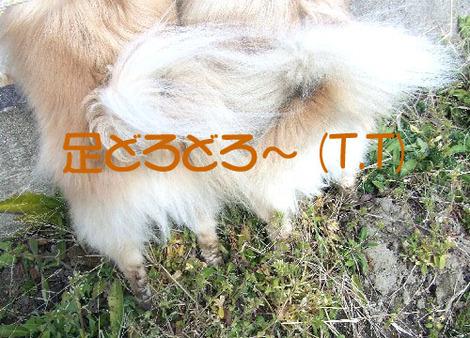 Dscf43311_1